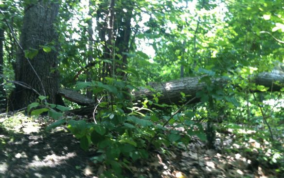 fallen tree 3 ed