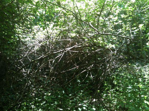 fallen tree 7