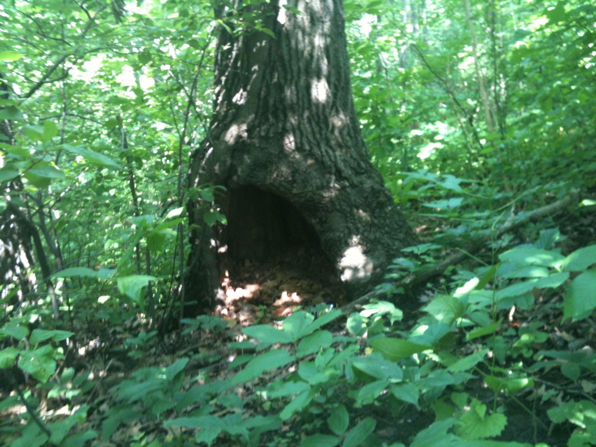 woods | 115 journals