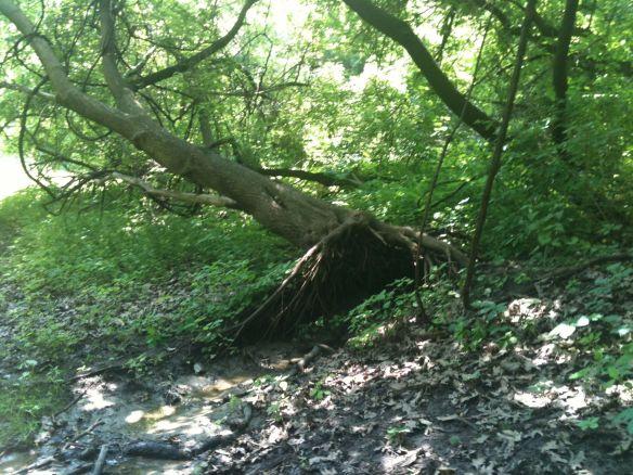 trickle tree