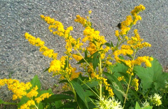 Goldenrod made change.