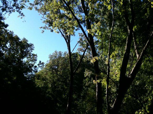 blue sky above woods