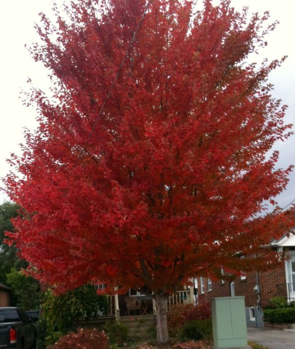 red tree #2