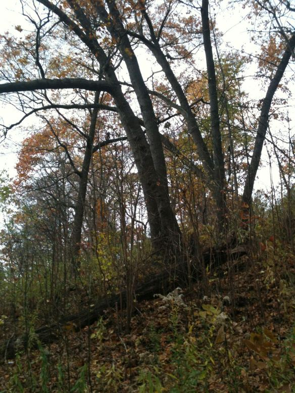 Nov woods hillside