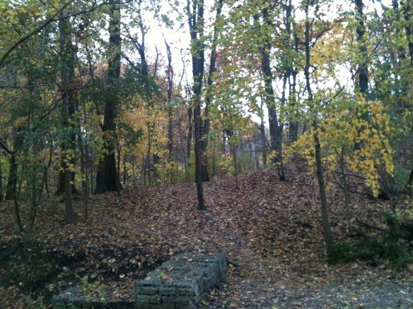 Nov woods near wall